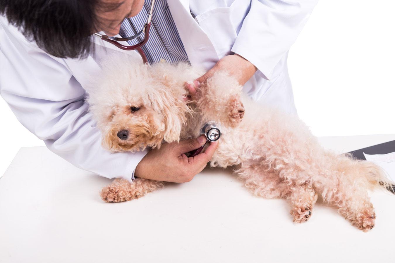 Hamster en el veterinario
